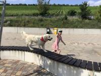 2021-07-23_Hundestaffel Roterplatz (29)